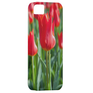 Red Tulips iPhone SE/5/5s Case