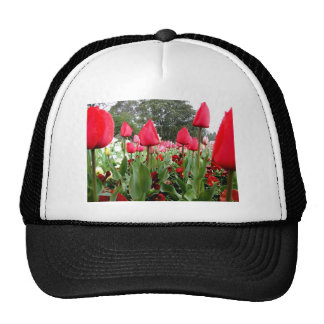 Red Tulips Looking Up Trucker Hat