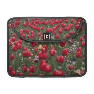 Red Tulips Macbook Case
