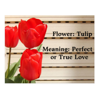 Red Tulips Mean True Love Postcard