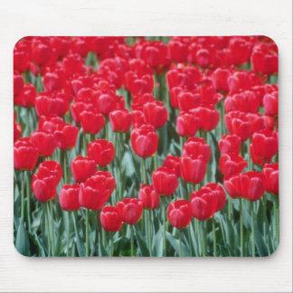 Red tulips, Ottawa flowers Mousepads
