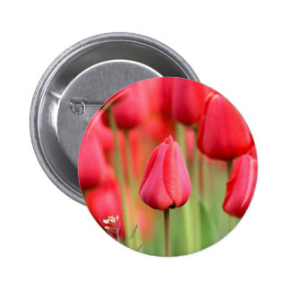 Red Tulips Photo Pinback Buttons