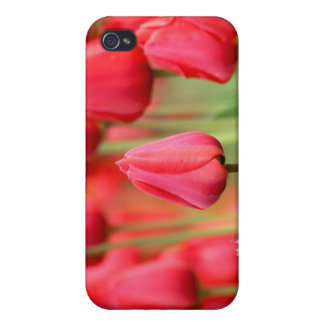 Red Tulips Photo Cases For iPhone 4