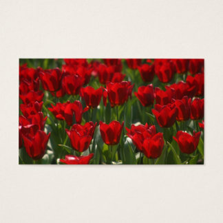 Red Tulips Profile Business Cards