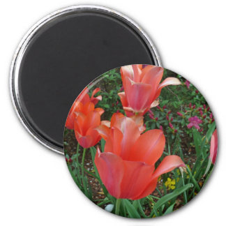 Red Tulips Refrigerator Magnet