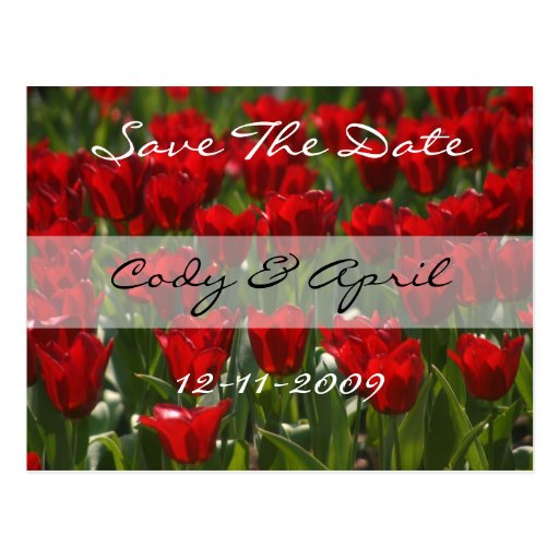 Red Tulips Save The Date Invitation Postcard