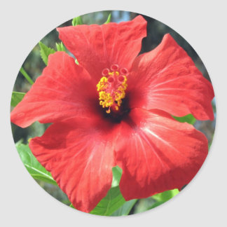 Red Turkish Flower Classic Round Sticker