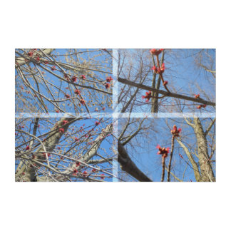 Red twigs acrylic print