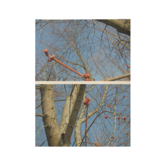 Red twigs wood poster