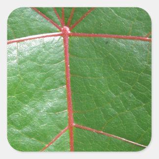 Red veined leaf square sticker