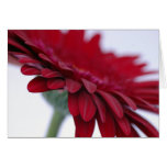 Red Velvet Card
