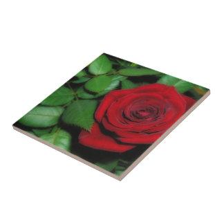 Red Velvet Ceramic Tile