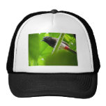 Red-vented Bulbul (Pycnonotus cafer) Mesh Hats