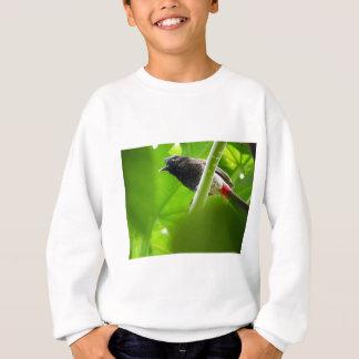 Red-vented Bulbul (Pycnonotus cafer) Sweatshirt