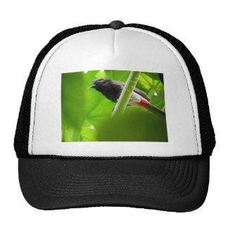 Red-vented Bulbul (Pycnonotus cafer) Trucker Hat