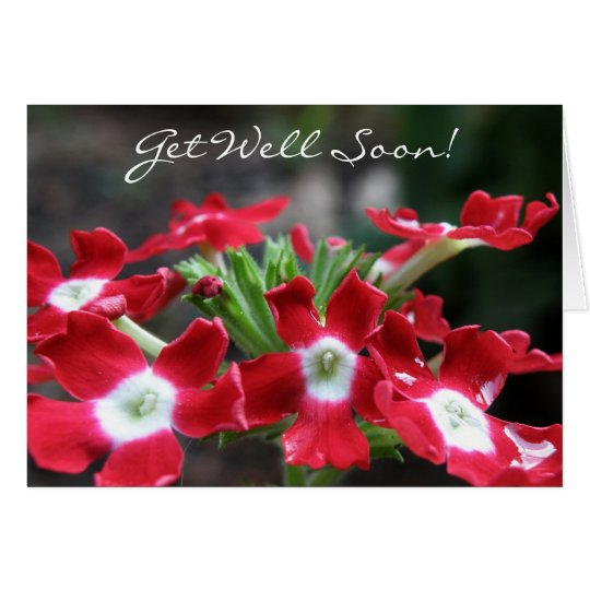 Red Verbena: Get Well Soon Card