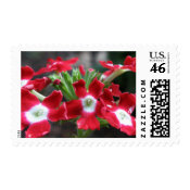 Red Verbena stamp