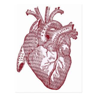 Red Vintage Anatomical Heart Postcard