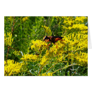 Red Wasp 5373 Card