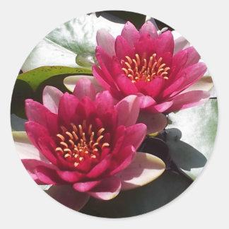 Red Water Lily Lotus Round Sticker