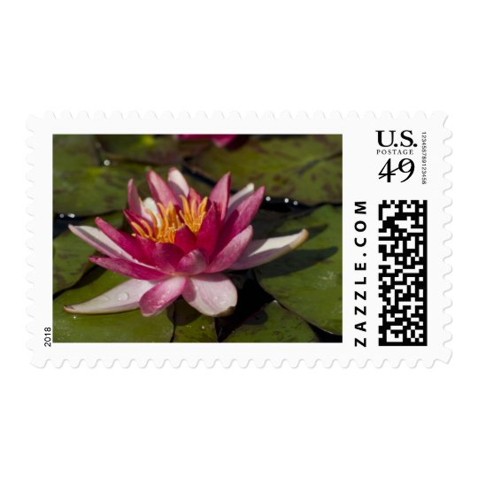 Red Water Lily Postage