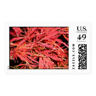 Red Waterfall Maple Postage Stamps