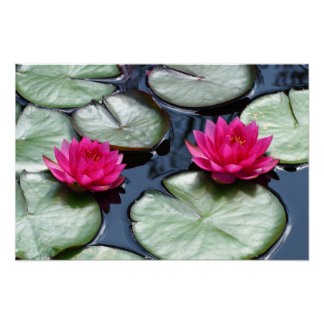 Red Waterlilies - Canvas Prints