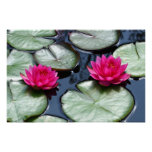 Red Waterlilies - Canvas Prints Poster