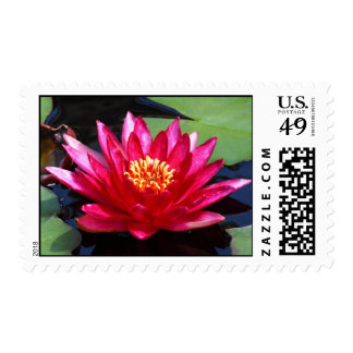Red Waterlily Stamp
