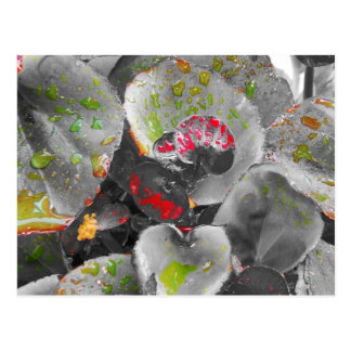 Red Wax Begonia Postcard