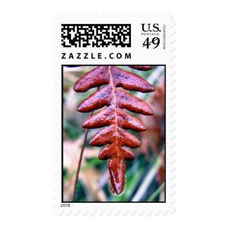 red wet fern stamp