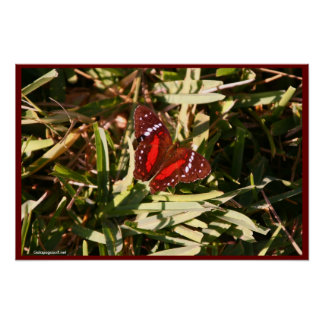 Red White and Black Butterfly Print