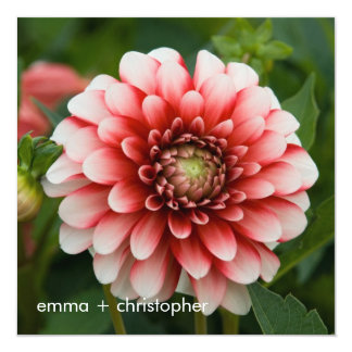 Red & White Dahlia Card