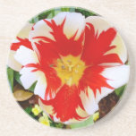 Red & White Flowers Drink Coaster