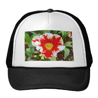 Red & White Flowers Hat