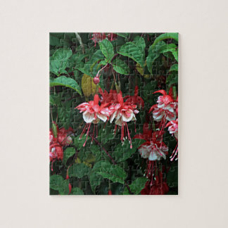 Red & White fuchsia flowers in bloom in garden 2 Jigsaw Puzzle