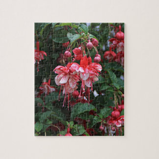 Red & White fuchsia flowers in bloom in garden Jigsaw Puzzle