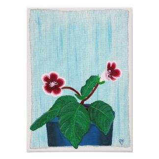 Red White Gloxinia African Violet Flower Poster