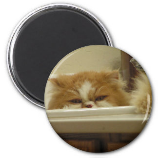 Red White Persian Cat 2 Inch Round Magnet