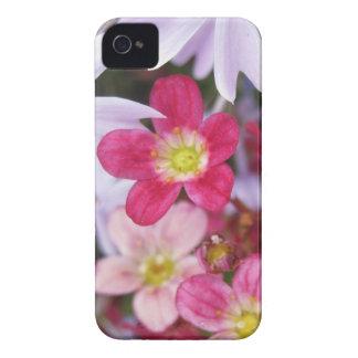 Red White, Pink Flower Blackberry Case