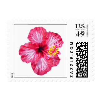 red white pink hibiscus stamps