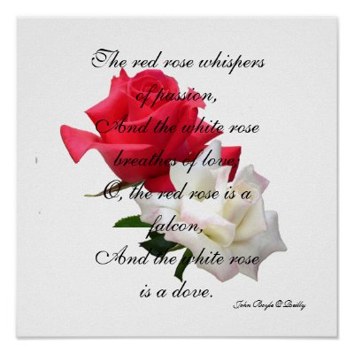 Red + White Rose Poster/Print, made from photos taken at a rose show
