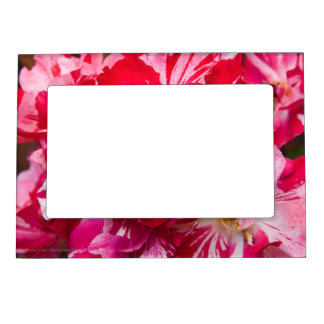 Red-White Roses Magnetic Photo Frames