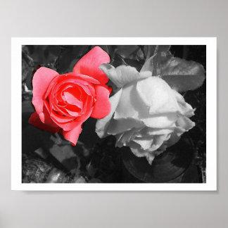 Red & White Roses Poster