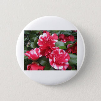 Red & White Striped Roses Pinback Button