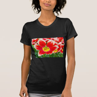 Red white tulip in field of tulips T-Shirt