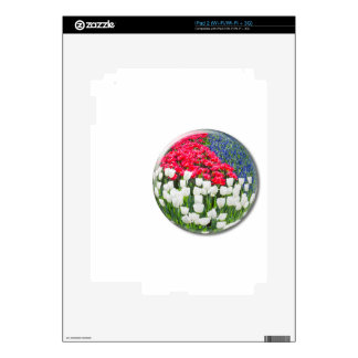 Red white tulips and blue grape hyacinths decal for the iPad 2