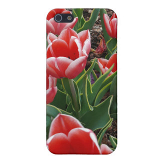Red & White Tulips Cover For iPhone 5