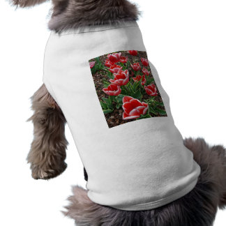 Red & White Tulips Dog Clothes