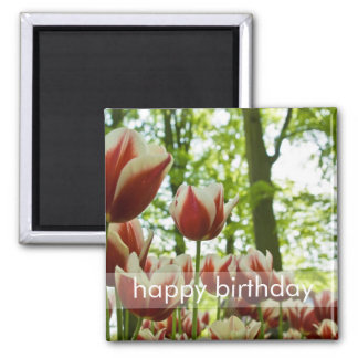 Red & White Tulips DSC0869 2 Inch Square Magnet